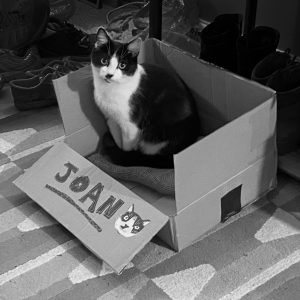 Image of Joan the cat