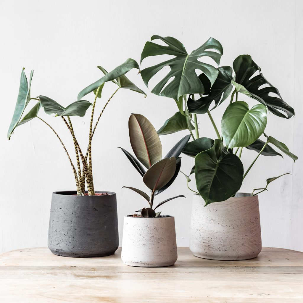 Image of plants from Leaf Envy